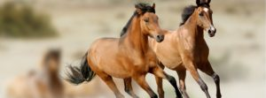 Keeping Your Equine Friend Healthy