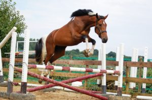 Choice for Someone who Has a jump Horse