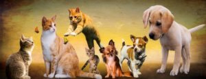 A Pet Shop With Well-Rounded Selection of Products and Services Your Best Bet