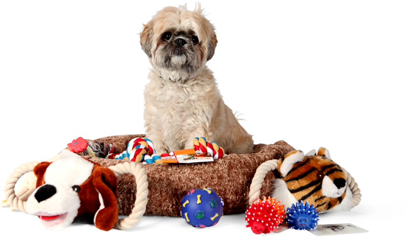 Finding Discount Pet Supplies Online