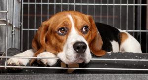 Owning Stylish End Table Dog Crates