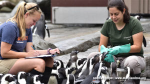 How To Start Career In Working With Animals?