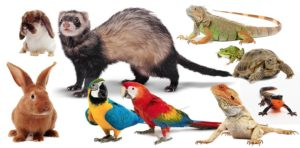 Considering the Many Exotic Pets
