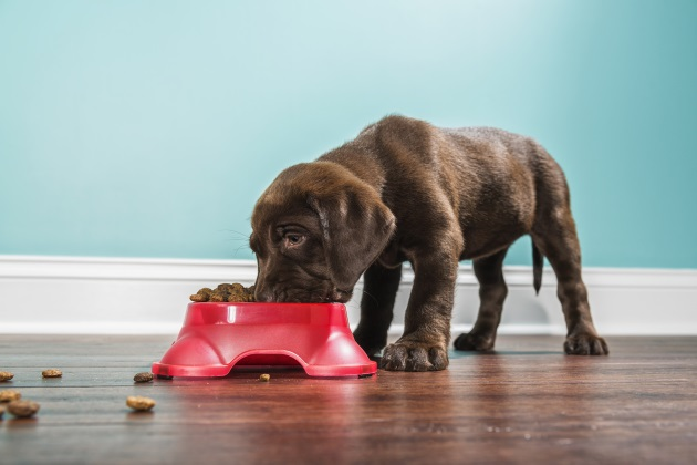 Pet Supplement Facts That You Need To Know