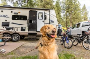 Travel RVing With Pets