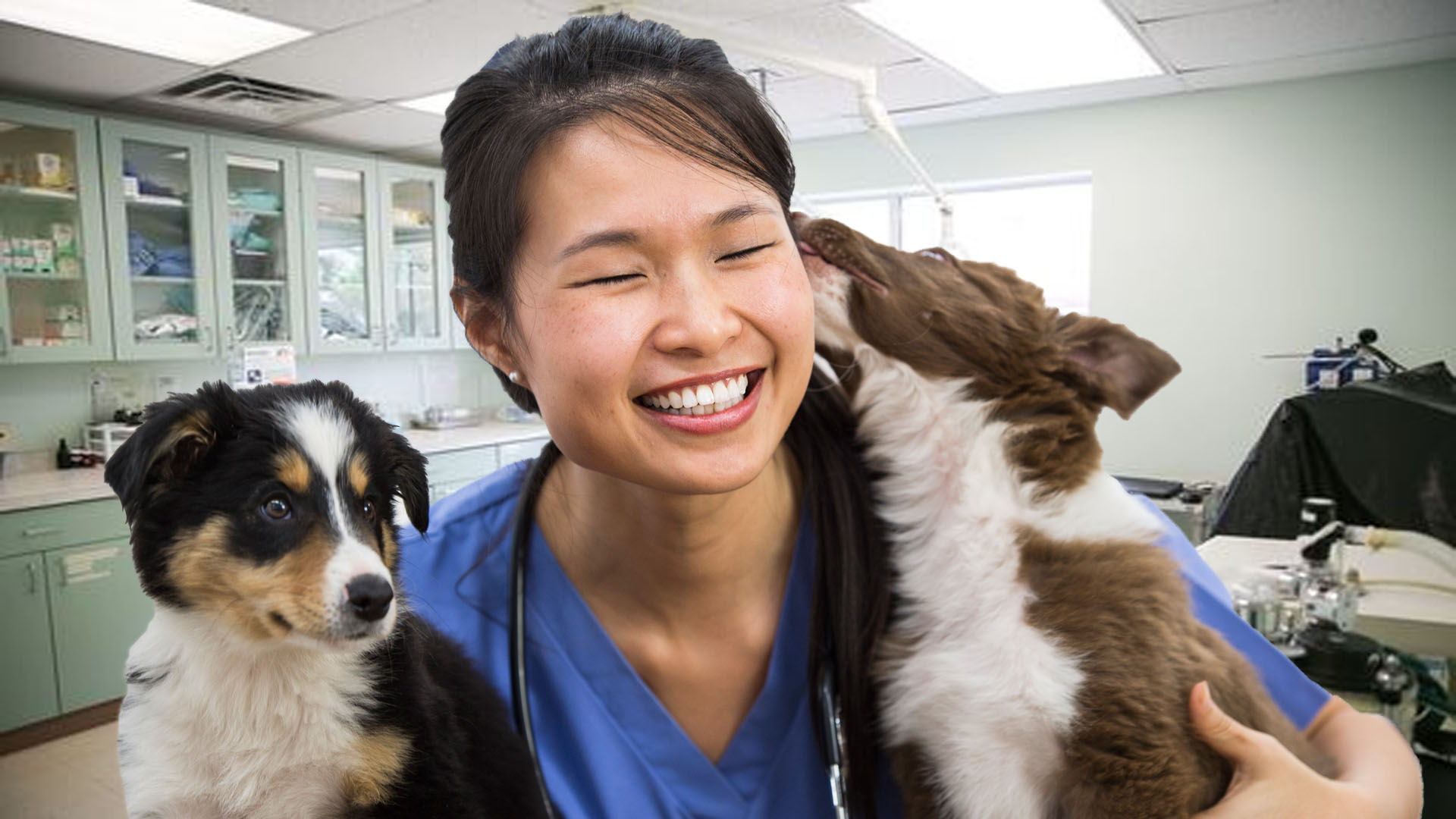 Why Everyone Needs a Good Veterinarian in Their Life