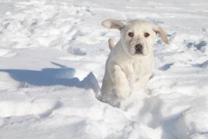 15 Fun Information About Dogs