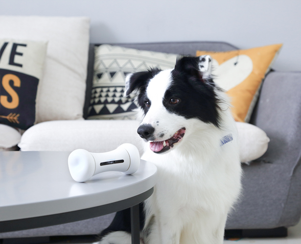 Having Fun With Your Dog Using Pet Toys