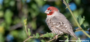 Information and Finch Tips for Bird Lovers