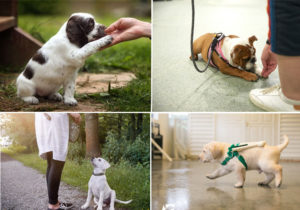 Guide to Puppy Obedience Classes