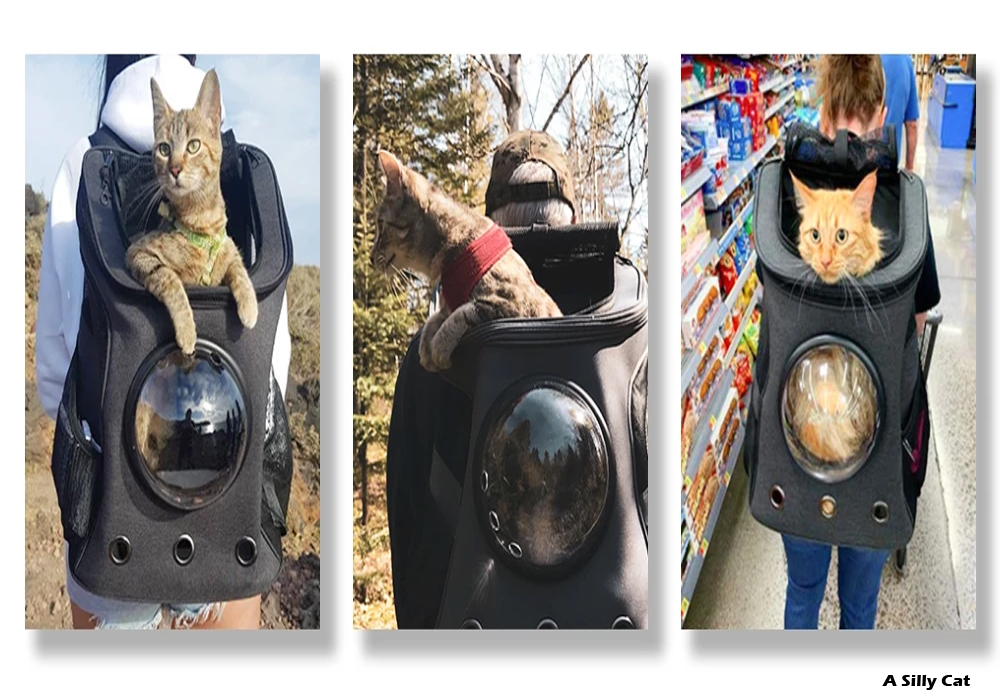 How to Select the Pet Carriers For Cats