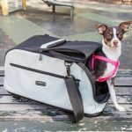 Pet Carriers for Small Dogs – Enjoy Easy Pet Travel