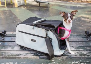 Pet Carriers for Small Dogs - Enjoy Easy Pet Travel