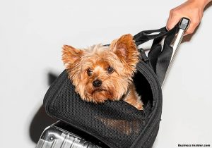Pet Carriers: A Convenient Way to Travel