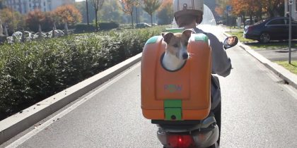 The Dangers of Riding with a Motorcycle Even If With Pet Carriers