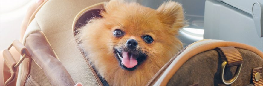 What You Should Know About Pet Carriers