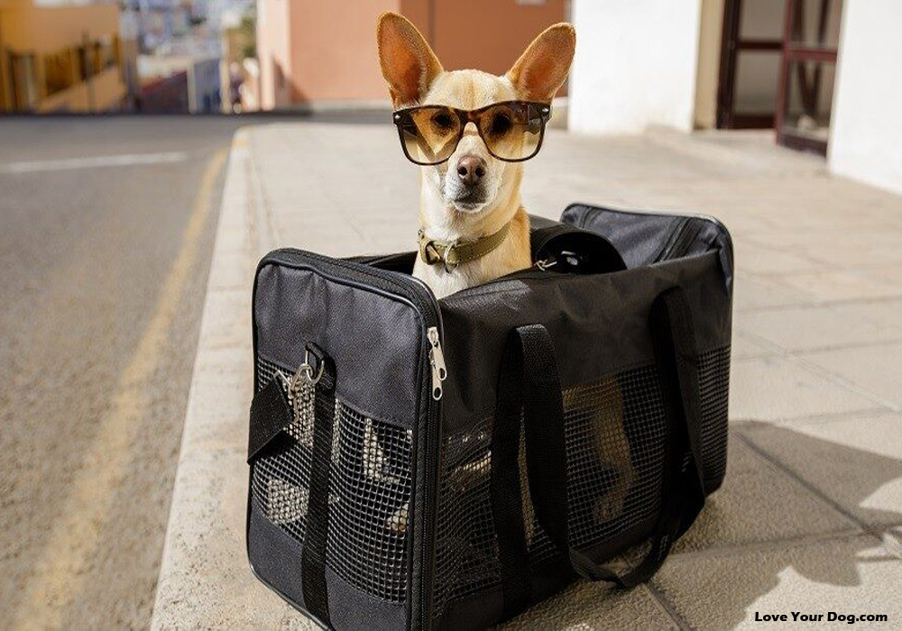Wheeled Pet Carrier – A Wise Choice For Your Pet While Traveling