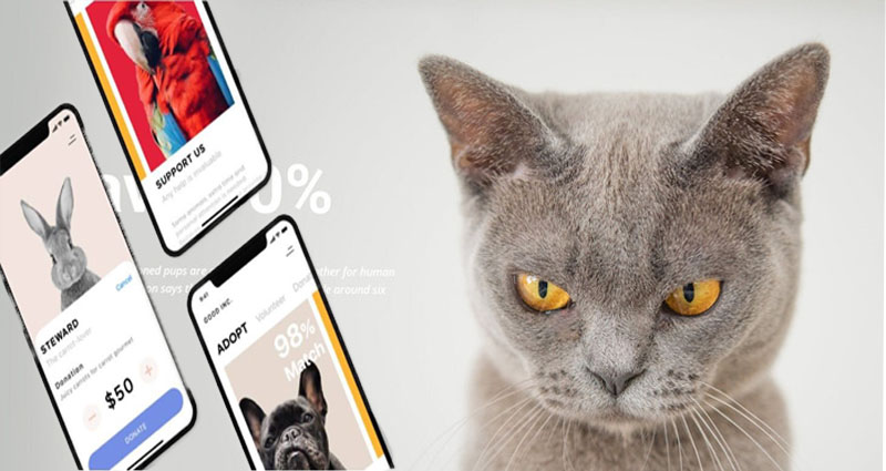 How you can Save Time and Money Purchasing at a web-based Pet Shop