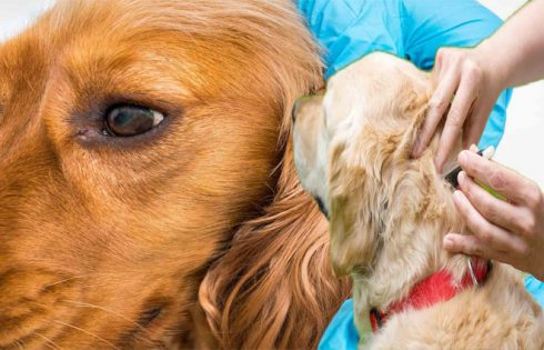 Lyme's Illness In Dogs - How you can Shield Your Best Buddy