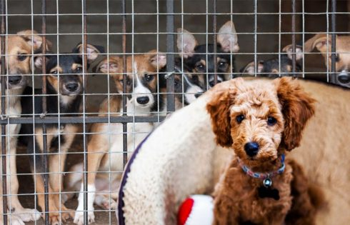 The Importance of Locating the right Pet Store