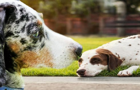 The Troubles and Rewards of Functioning within a Pet Shop